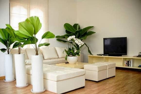 Thiết kế tránh nóng cho ngôi nhà ngày hè – kientructlt